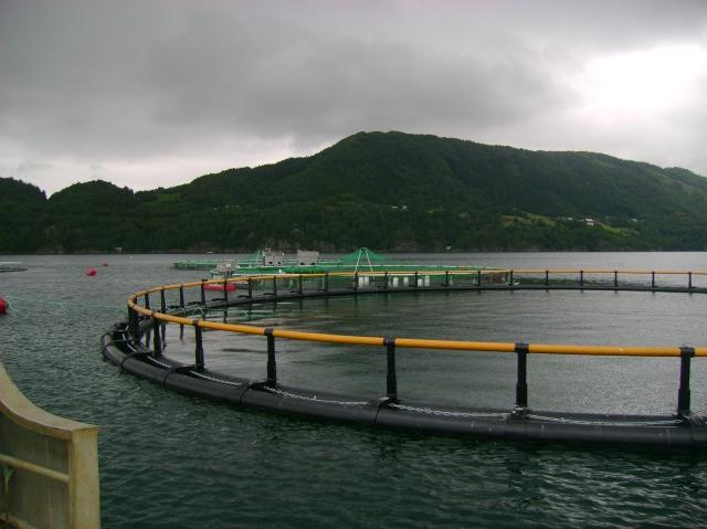 The halibut farm at Averøy-