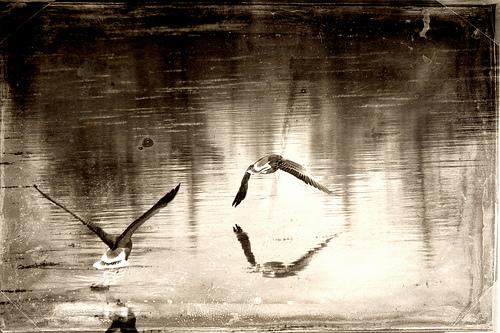 12-birdies